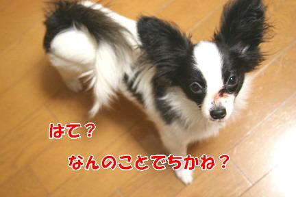 d0013149_123271.jpg