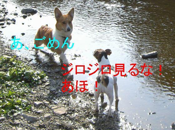 f0053952_2012164.jpg