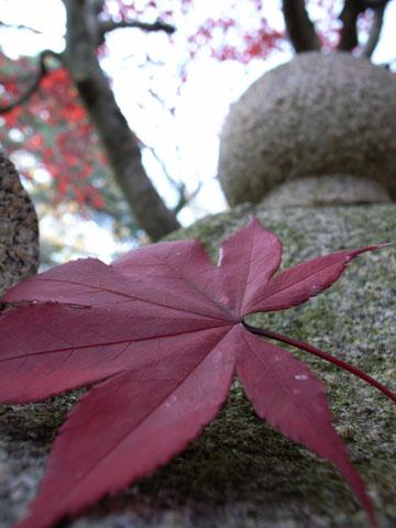 山形の紅葉_e0084756_13472626.jpg
