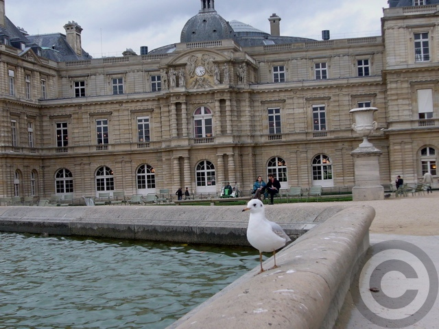 ■公園の鳥たち(パリ)_a0008105_22372960.jpg