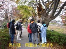 彦根の新しい「まち歩き」・・・『彦根遊び博2007』_f0017409_13571866.jpg