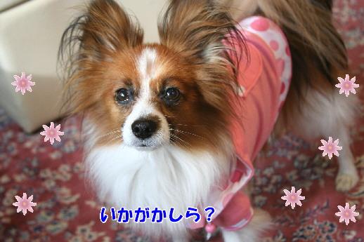 d0013149_0172676.jpg