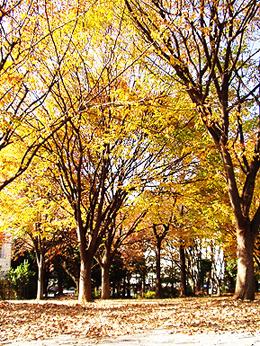 公園へ行こう_e0071652_1323091.jpg