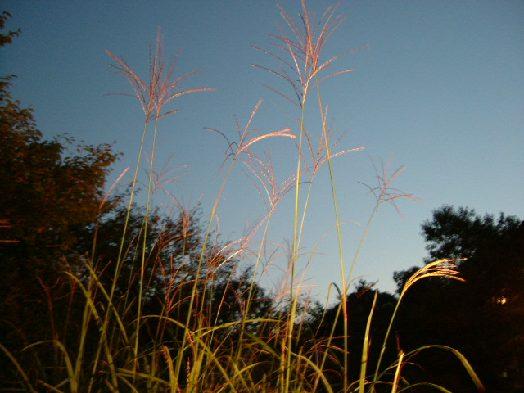 オークリーフ(宮島。対岸の、庭園の宿・石亭への旅)_f0049672_1219619.jpg