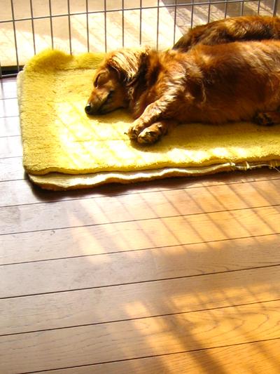 寝つづける犬_d0028499_947436.jpg