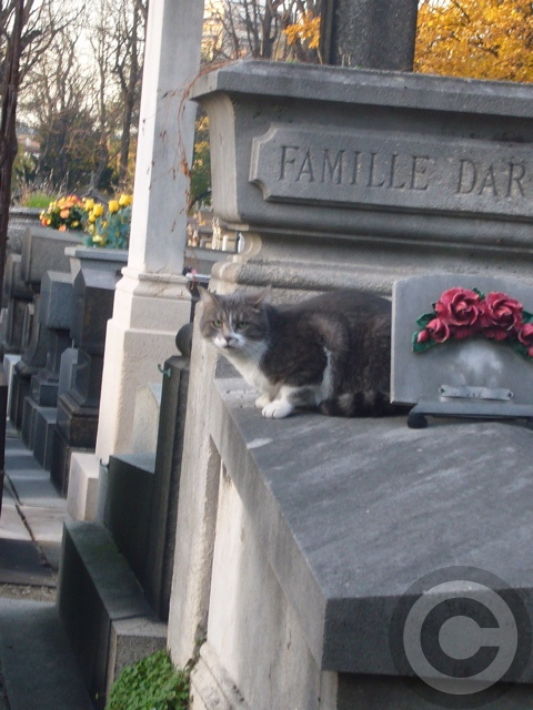 ■お墓を守るニャンコたち(パリ)_a0008105_1935642.jpg