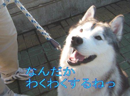 f0112407_0501995.jpg