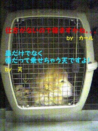 f0086474_23103820.jpg