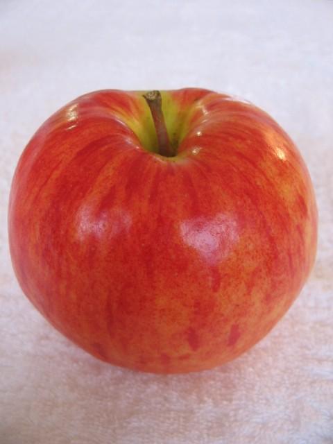 りんごの話だったけど_a0091095_151097.jpg