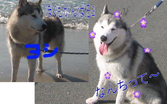 f0112407_15503916.jpg