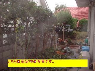 f0031037_1934973.jpg