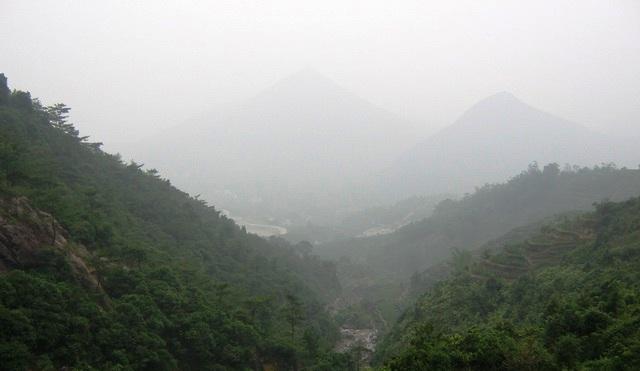 凤凰茶の生産環境ーーー烏東宋種単叢之3_f0070743_054936.jpg