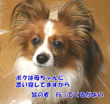 d0013149_08133.jpg