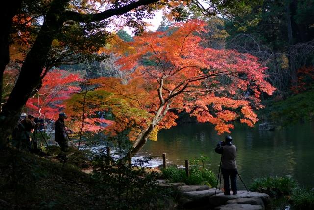 成田山公園_f0018464_13464823.jpg