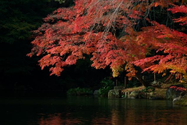 成田山公園_f0018464_13471895.jpg