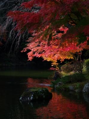 成田山公園_f0018464_14395310.jpg