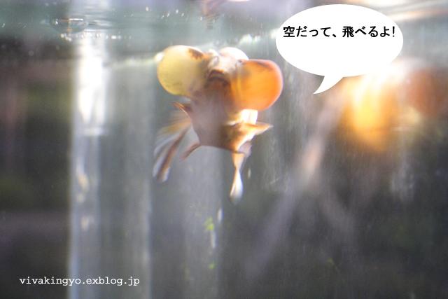 f0118214_924298.jpg