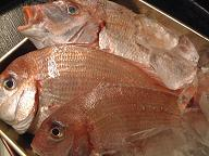 漁師料理_d0099845_22461712.jpg