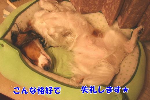 d0013149_031737.jpg
