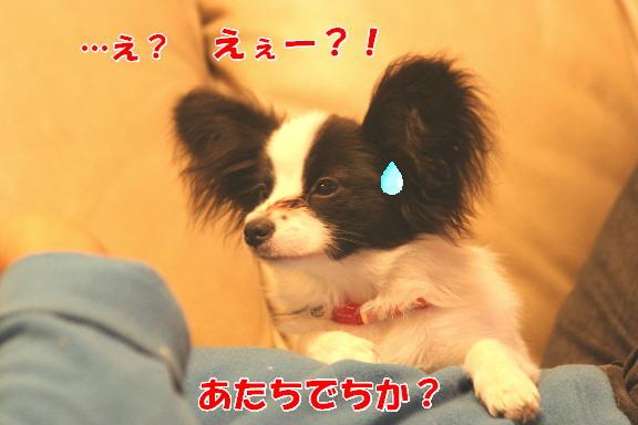 d0013149_0453854.jpg