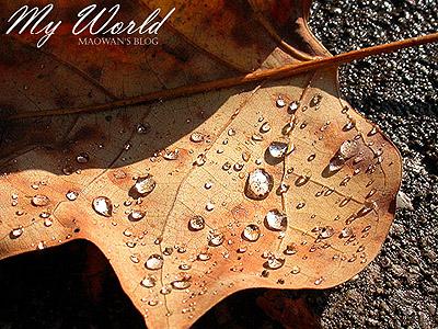 枯れ葉と水_f0096654_1636252.jpg