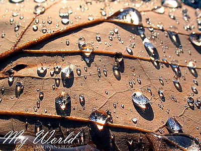 枯れ葉と水_f0096654_16363861.jpg