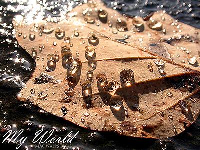 枯れ葉と水_f0096654_16365639.jpg
