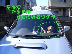 b0098660_1763843.jpg