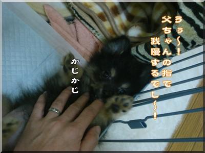 b0078073_23482781.jpg