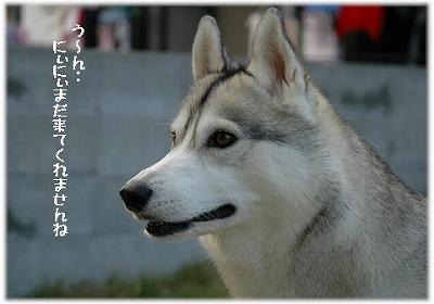 a0047325_22534564.jpg