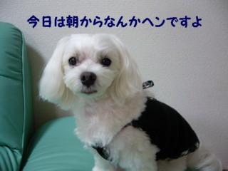 f0005727_1521575.jpg
