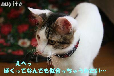 f0063729_13391660.jpg