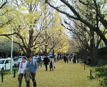 2006.12.11  神宮外苑銀杏並木_a0083571_2022559.jpg