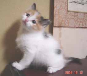 ターキッシュバン子猫5週目_e0033609_16252514.jpg