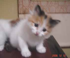 ターキッシュバン子猫5週目_e0033609_16264281.jpg