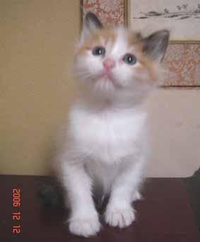 ターキッシュバン子猫5週目_e0033609_1626594.jpg