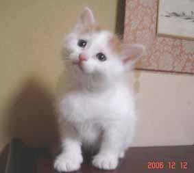 ターキッシュバン子猫5週目_e0033609_16273449.jpg