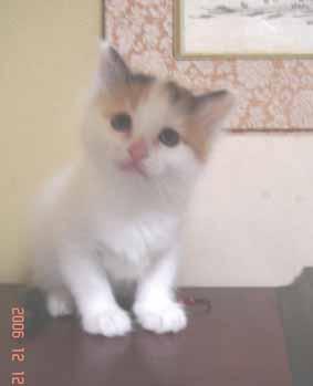 ターキッシュバン子猫5週目_e0033609_16283475.jpg