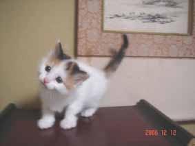 ターキッシュバン子猫5週目_e0033609_162945.jpg