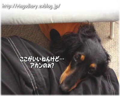 b0016976_0492464.jpg