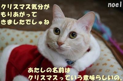 f0063729_1542104.jpg