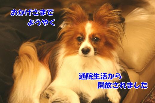 d0013149_039187.jpg