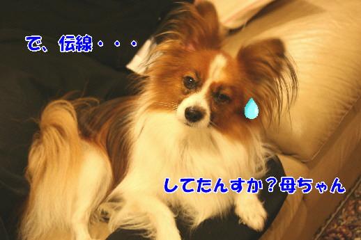d0013149_1151551.jpg