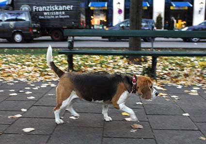 ミュンヘンの街中_a0070350_12472083.jpg