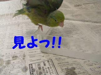 b0082757_0291168.jpg