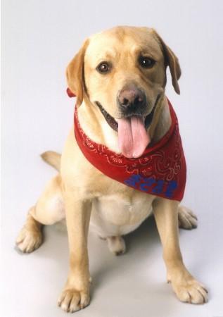 ポチたまの人気犬「まさお君」が病死_b0052564_14371415.jpg