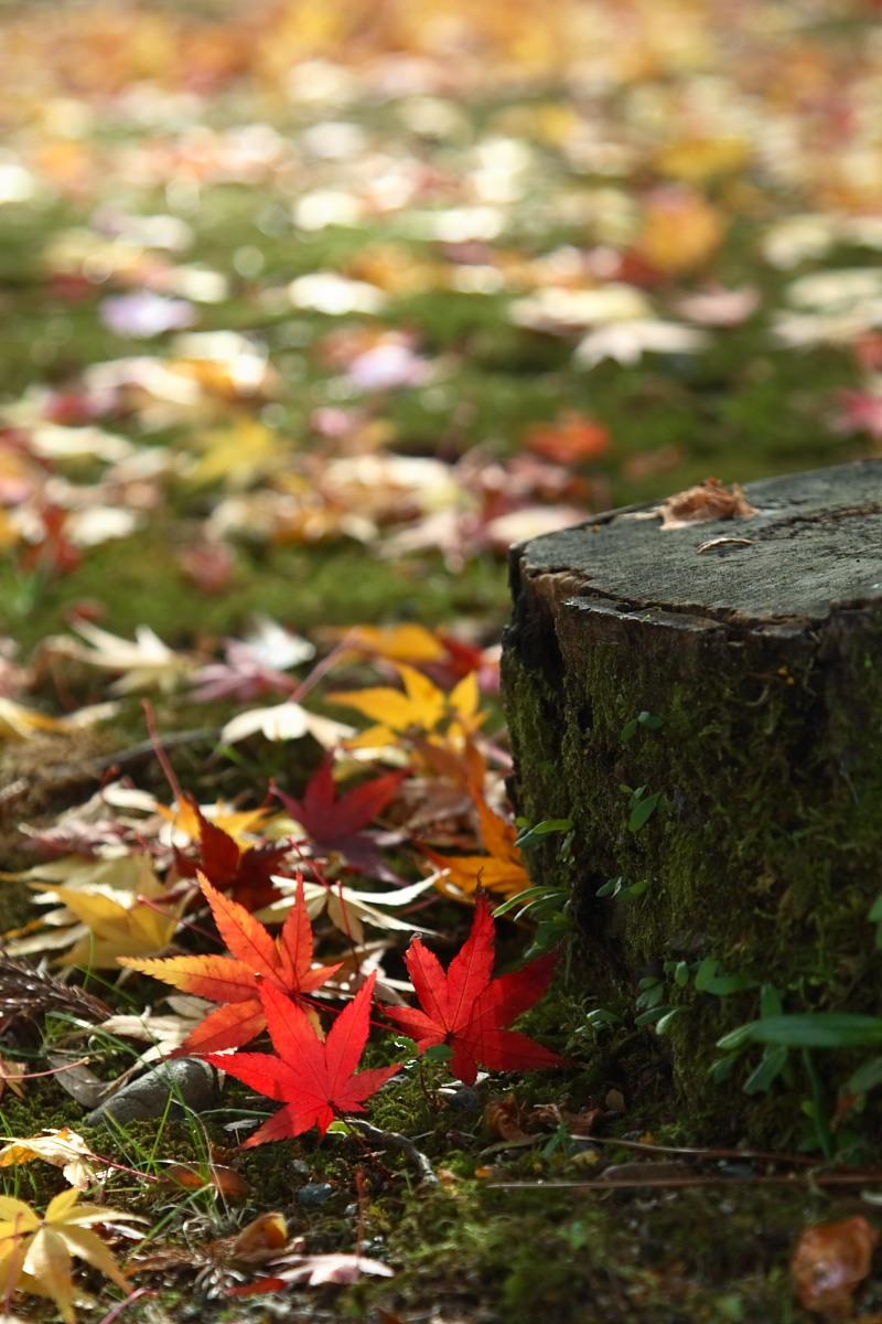 京都 嵯峨野 <嵐山> 紅葉 2_f0021869_933717.jpg