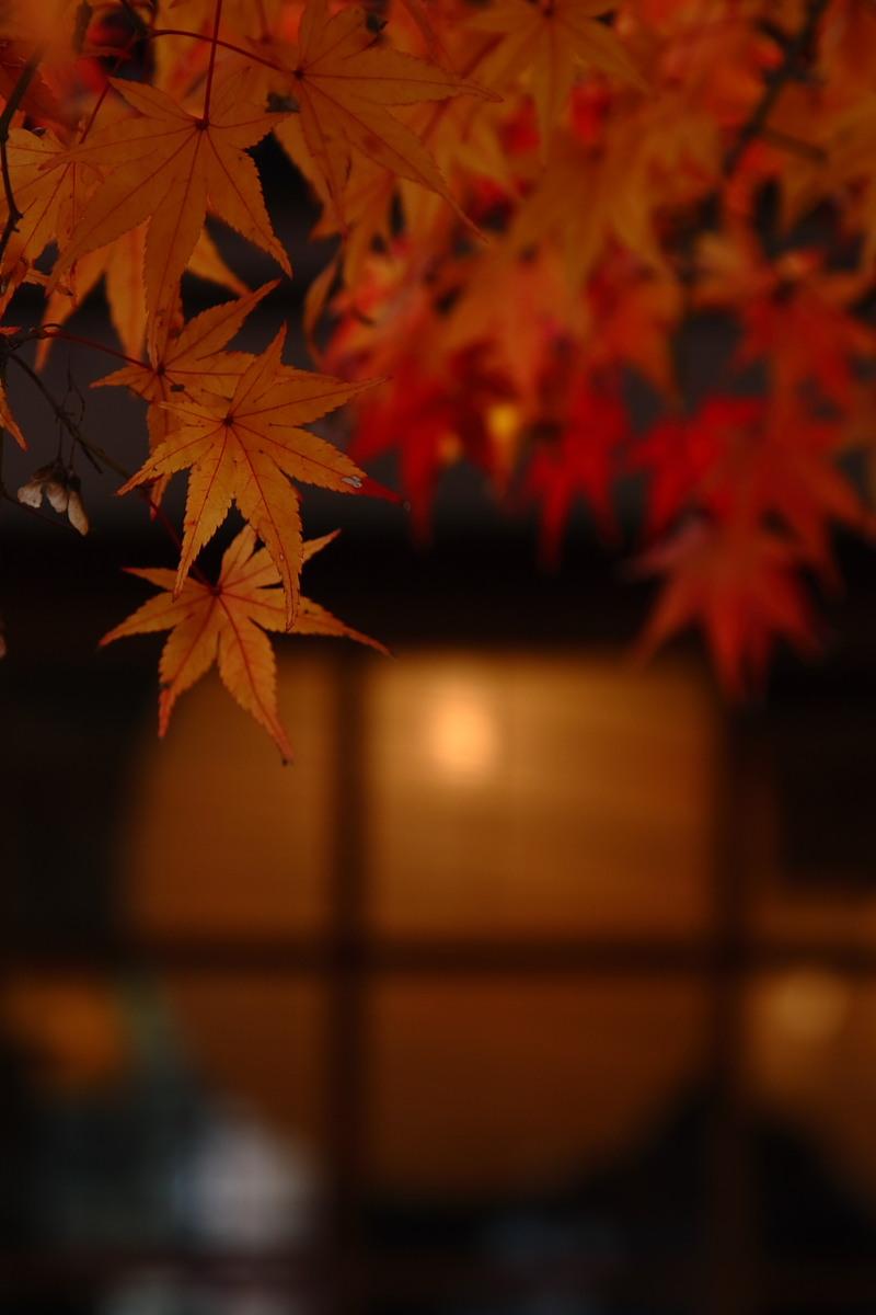 京都 嵯峨野 <嵐山> 紅葉 2_f0021869_934990.jpg