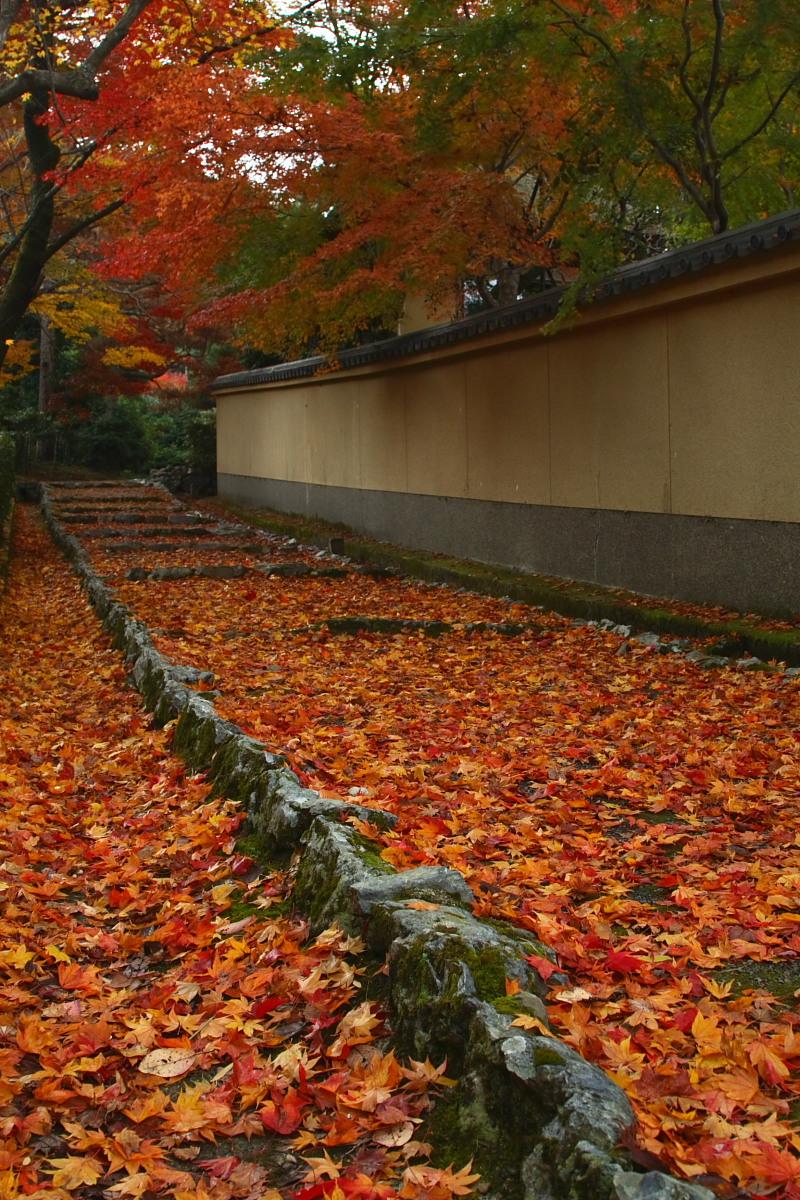 京都 嵯峨野 <嵐山> 紅葉 2_f0021869_9363166.jpg