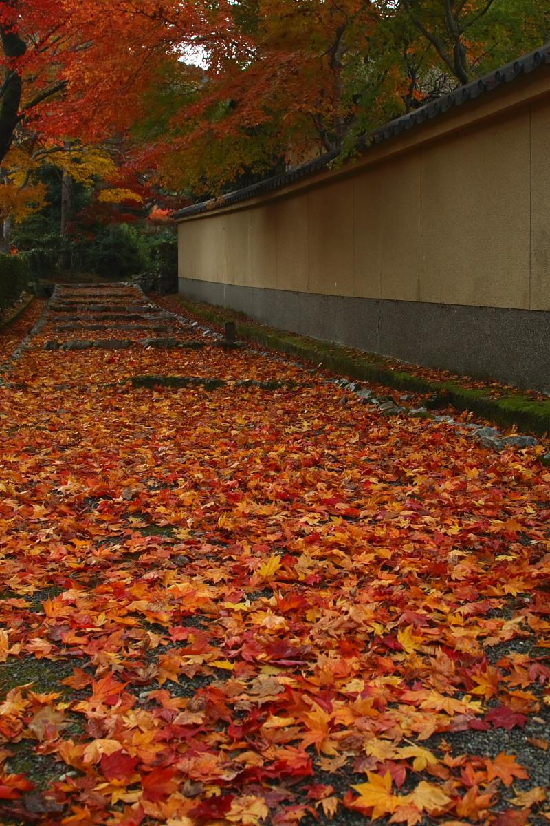 京都 嵯峨野 <嵐山> 紅葉 2_f0021869_9364951.jpg